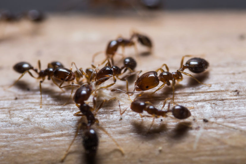 Ant Control Ultimate Pest Solutions